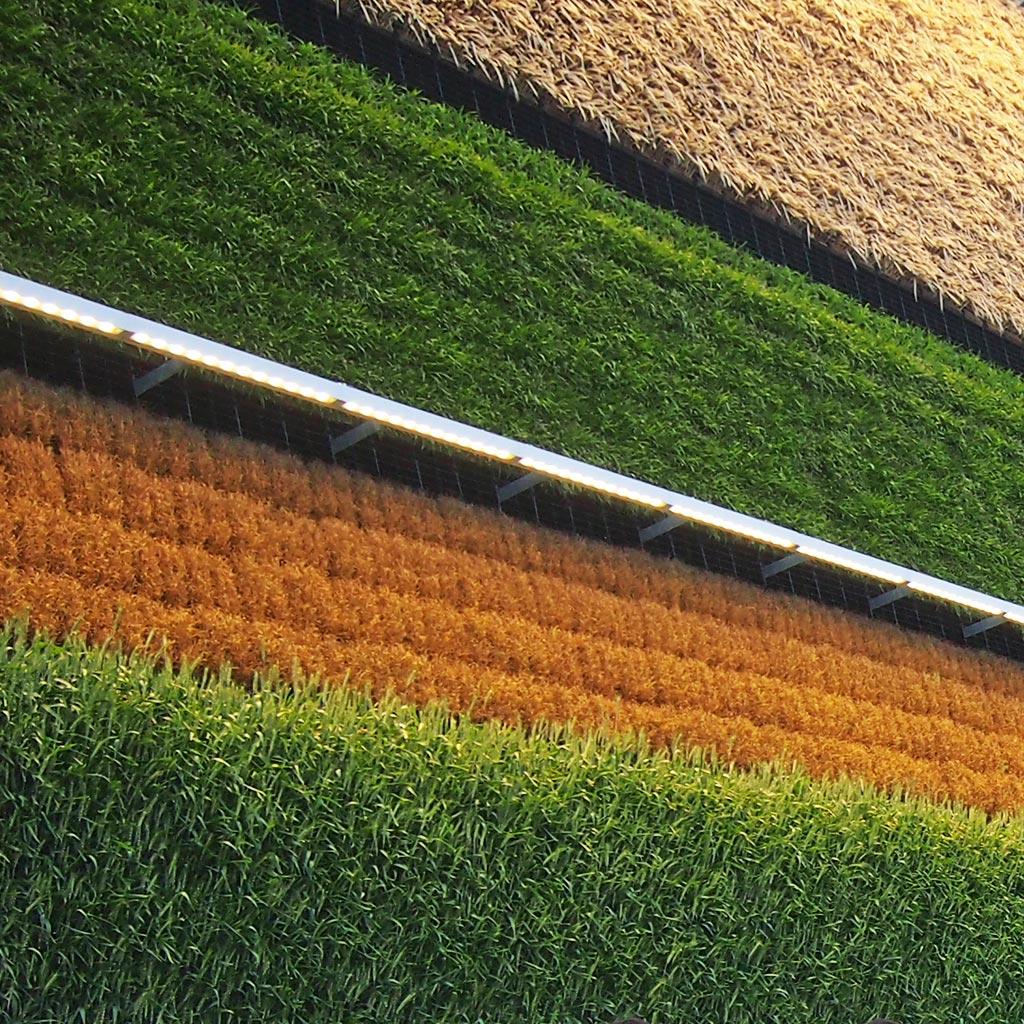 """קטע מקיר השדה האנכי של ביתן ישראל, עבור עיצוב ניוזלטר לקק""""ל אקספו."""